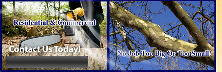 Ark-La-Tex Tree Service in Blanchard, Louisiana | Tree Service in Blanchard, LA | Tree Trimming in Blanchard, LA